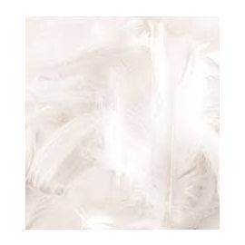 WHITE LOOSE FEATHERS 50G